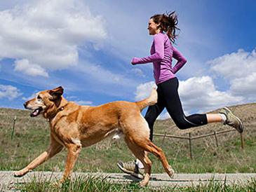 Τι προκαλεί η παχυσαρκία στους σκύλους και τρόποι αδυνατίσματος!